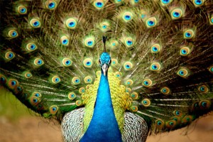 25 Most Beautiful Animals Photography StumbleUpon 5 300x200 Check it out!