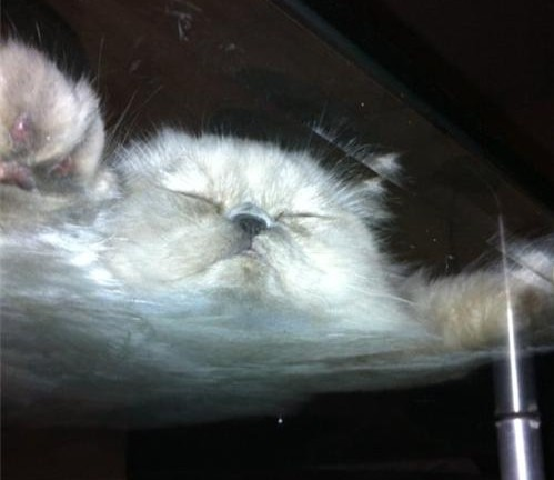 Cat on a glass table 3 e1305734427143 The view from below..