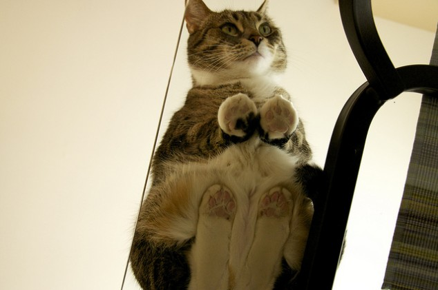 Cat on a glass table 9 634x421 The view from below..