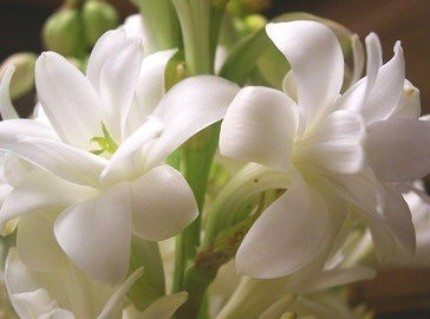 tuberose2 The scents of summer