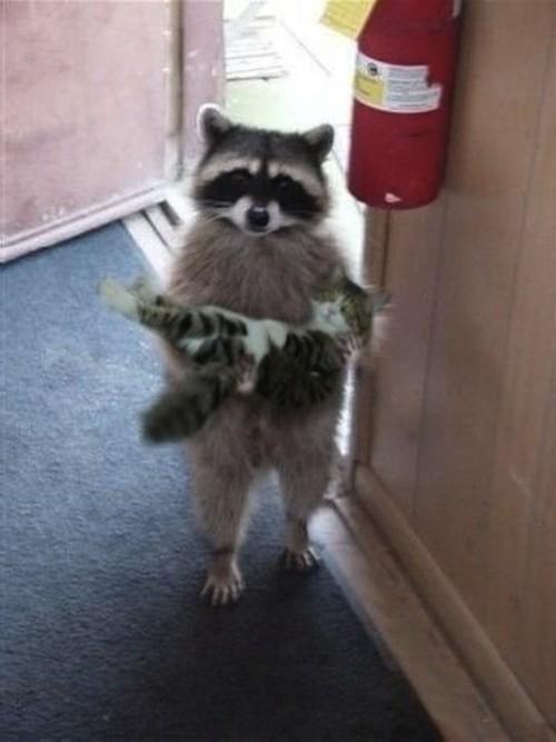 tumblr lv38v1u8HL1qi4relo1 500 Cats