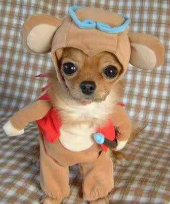 weird monkey dog costume HAPPY HALLOWEEN!